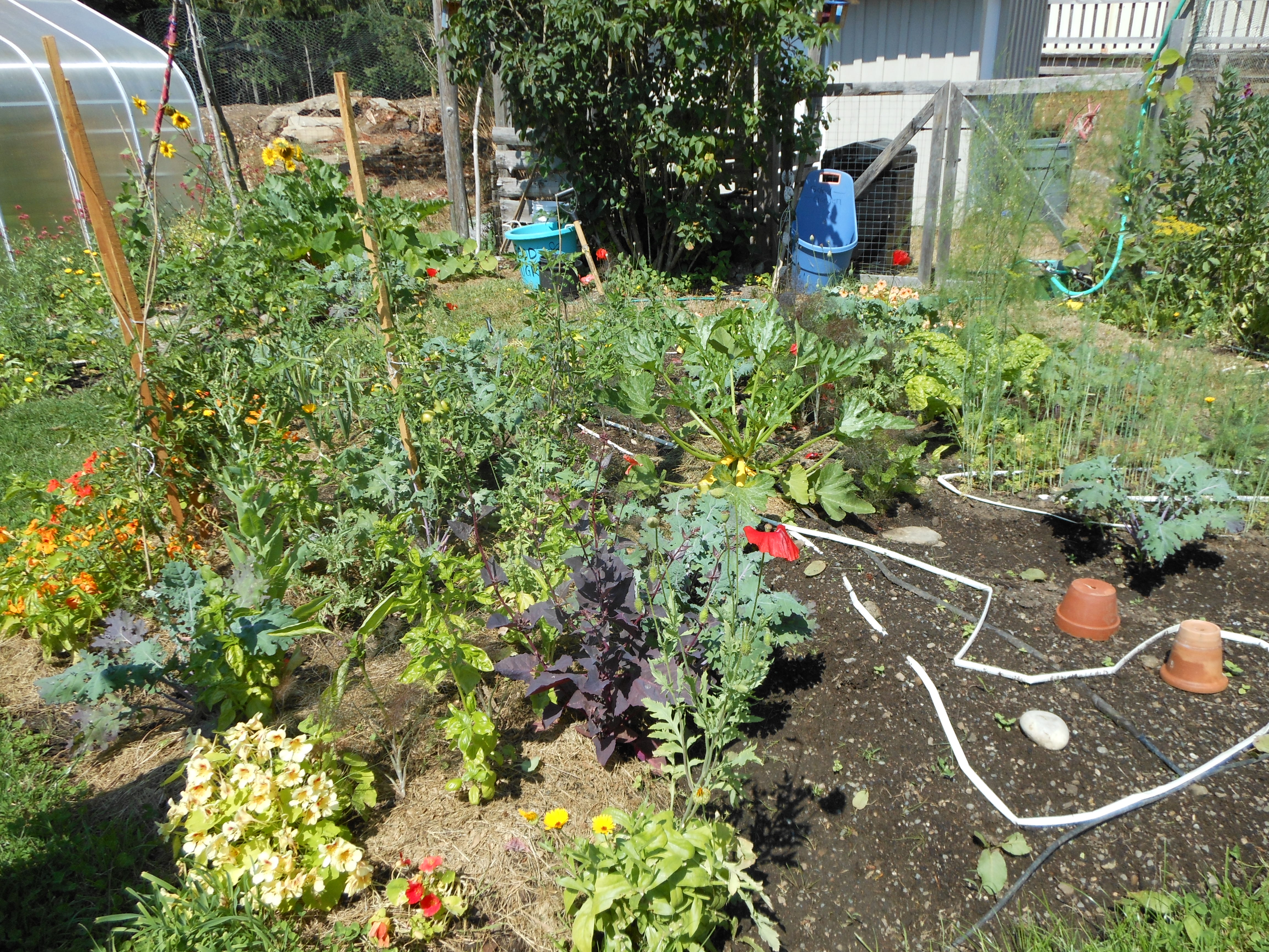 local agriculture - pizza garden