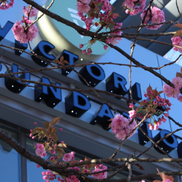 Victoria Foundation Building with Cherry Blossoms
